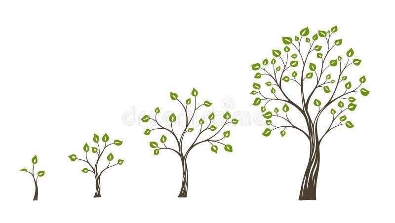 Зеленая концепция eco роста дерева Жизненный цикл дерева иллюстрация вектора