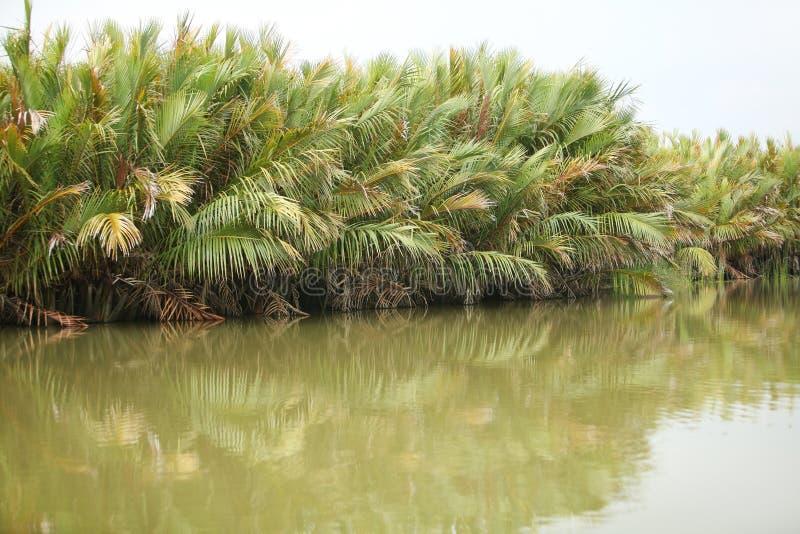 Зеленая ладонь против зеленого озера стоковые фотографии rf