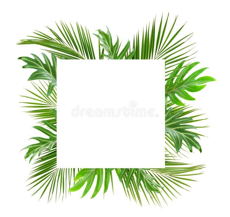 Зеленая ладонь разветвляет и monstera выходит с карточкой для текста стоковые изображения rf