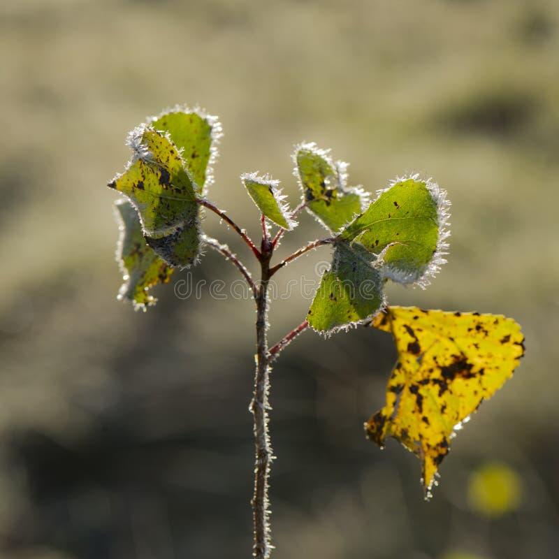 Зеленая листва лесных деревьев покрытых с изморозью стоковые фото