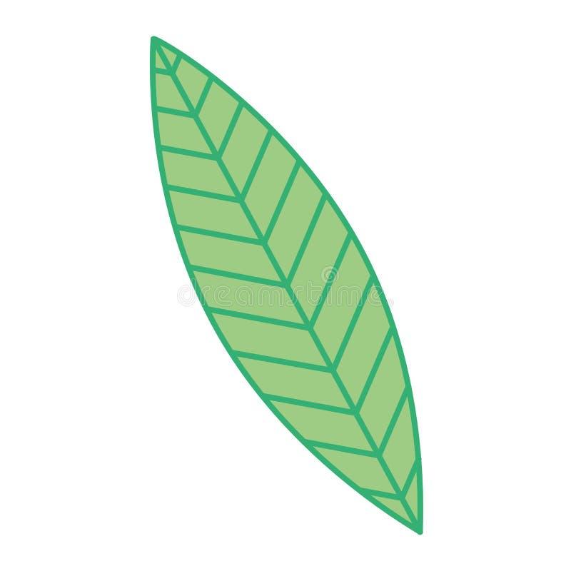 Зеленая листва природы лист ботаническая иллюстрация вектора