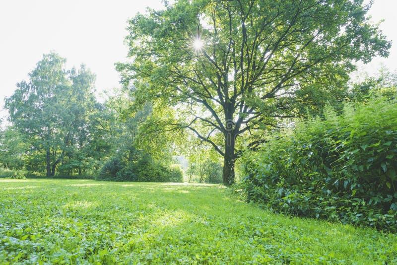Зеленая лужайка в парке стоковое изображение rf