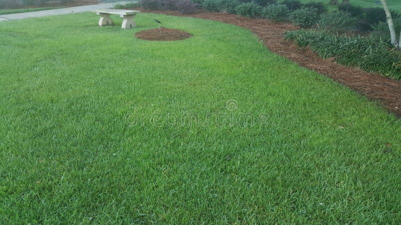 Зеленая лужайка с стендом стоковое фото rf
