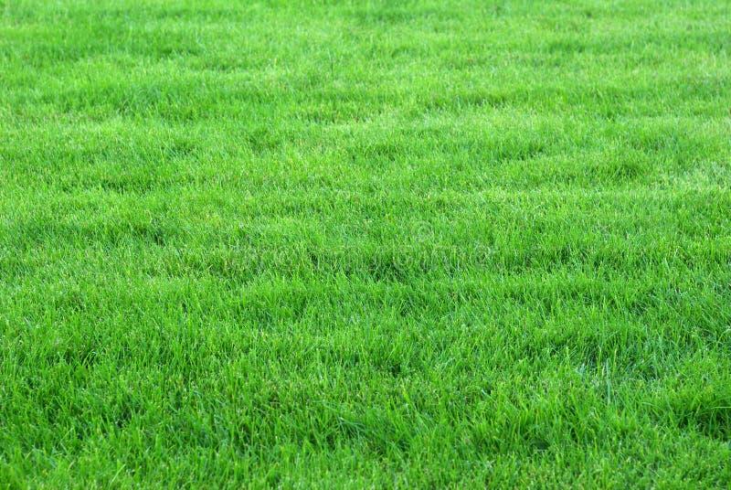 Зеленая лужайка стоковые изображения