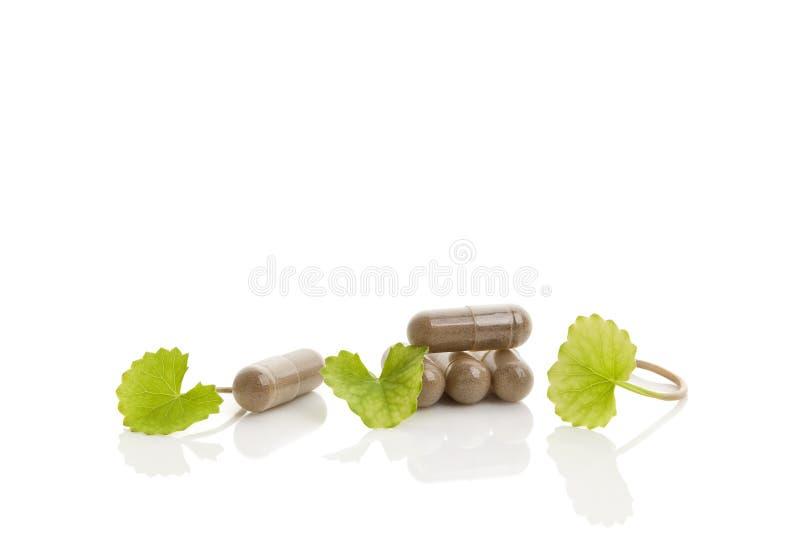 Зеленая медицина kola Gotu стоковая фотография rf