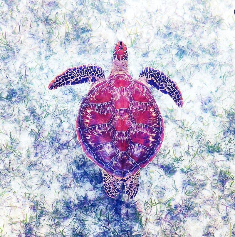 Зеленая морская черепаха плавая над seagrass стоковые фотографии rf