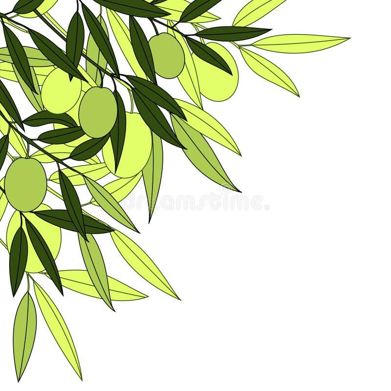 зеленая оливка иллюстрация штока