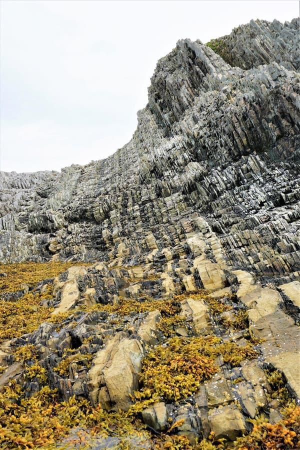 Зеленая основа пункта на Gros Morne стоковая фотография rf
