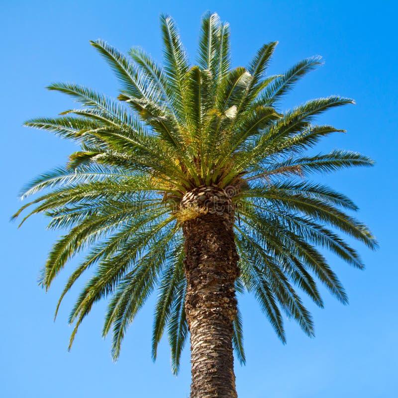 Зеленая пальма стоковое изображение rf