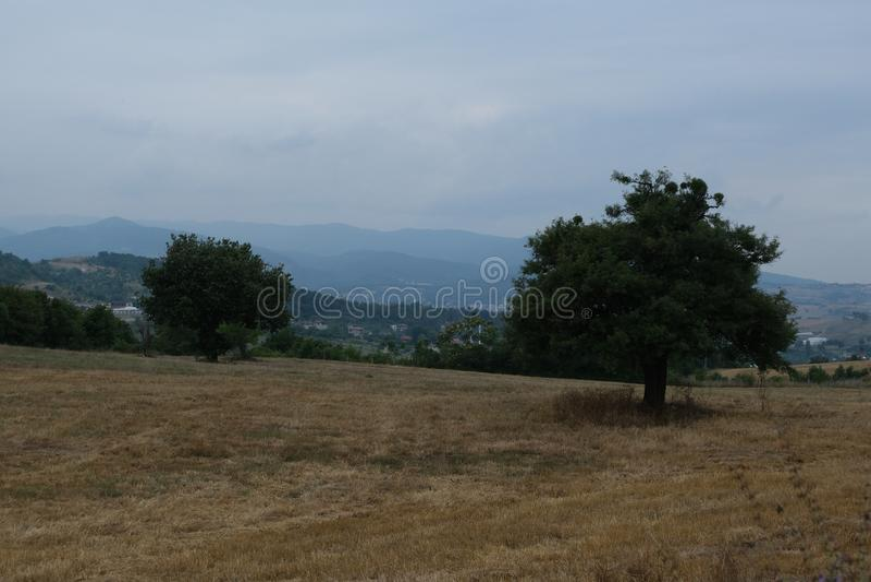 Зеленая панорама ландшафта с деревянной скамьей под деревом как фоновое изображение стоковые фотографии rf