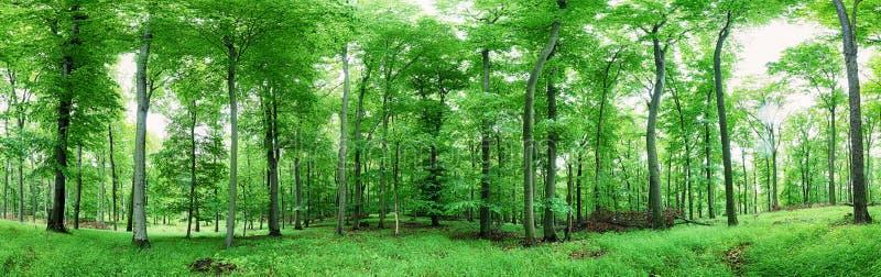 Зеленая панорама леса на дожде стоковая фотография