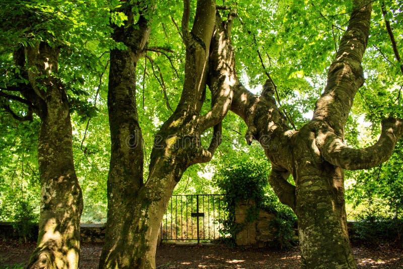 Зеленая предпосылка деревьев Природа, дизайн экологичности окружающей среды стоковое фото