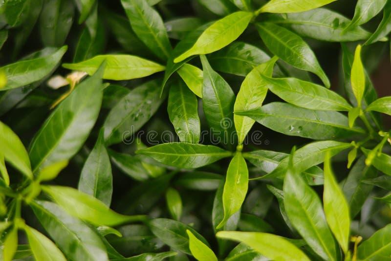 Зеленая предпосылка лист красивая и свежая стоковые изображения