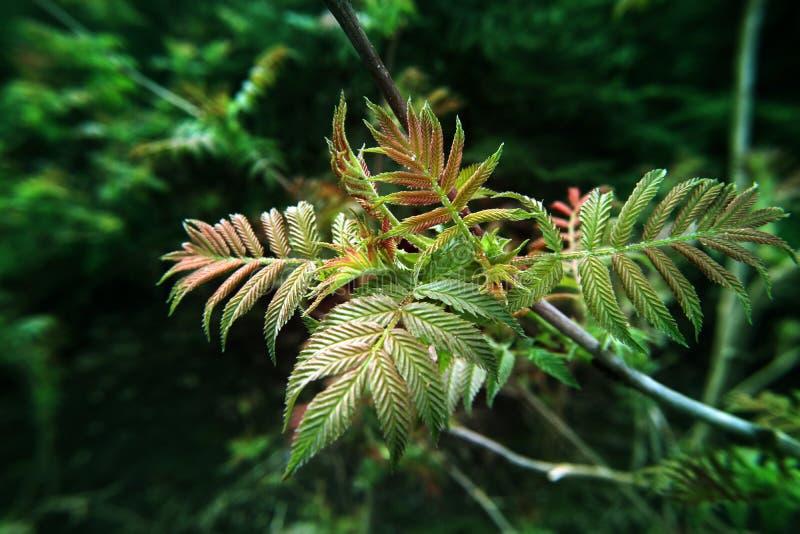 Зеленая предпосылка молодого избежания ветви на фото макроса леса стоковые изображения rf
