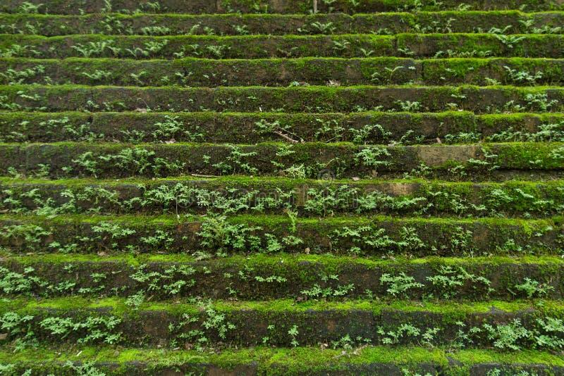 Зеленая предпосылка мха, конец вверх по камню с зеленым мхом стоковая фотография