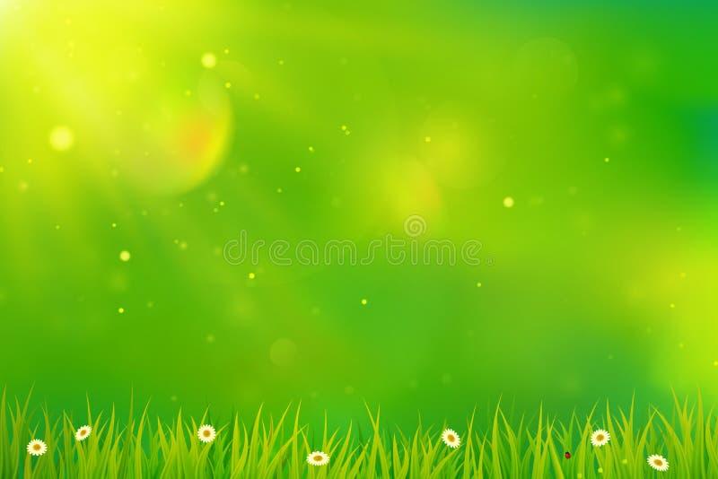 Зеленая предпосылка с травой и цветками иллюстрация вектора