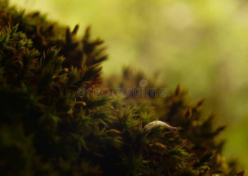 зеленая предпосылка bokeh текстуры макроса ствола дерева конца-вверх мха стоковые изображения