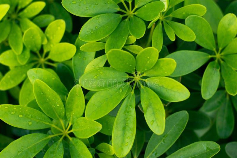 Зеленая природа красивая и освежать стоковые фото