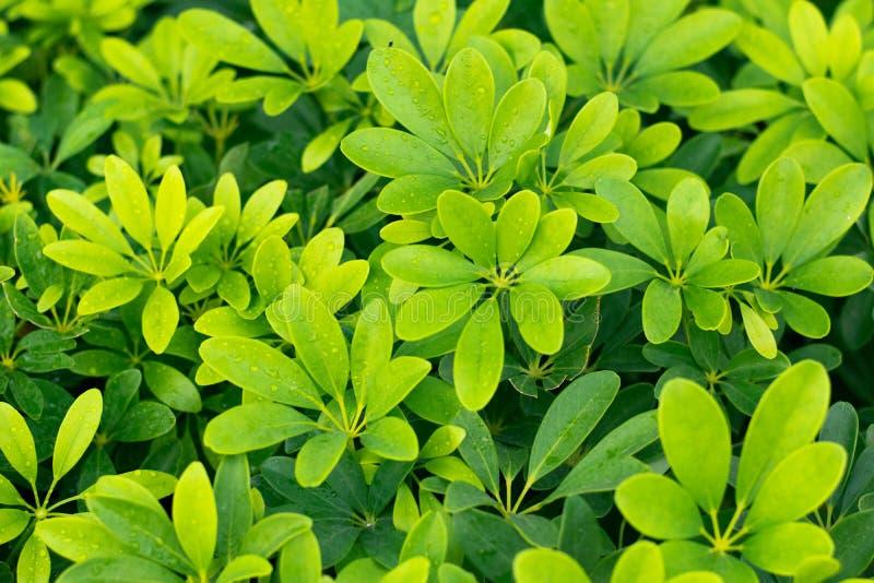 Зеленая природа красивая и освежать стоковые изображения rf