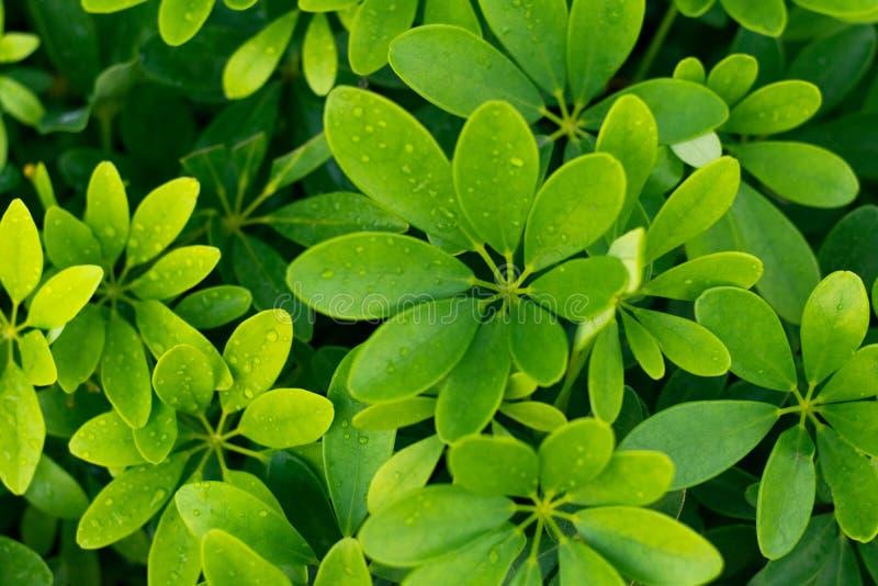 Зеленая природа красивая и освежать стоковое фото