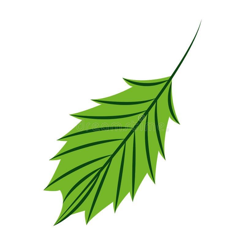Зеленая природа лист на белой предпосылке иллюстрация вектора