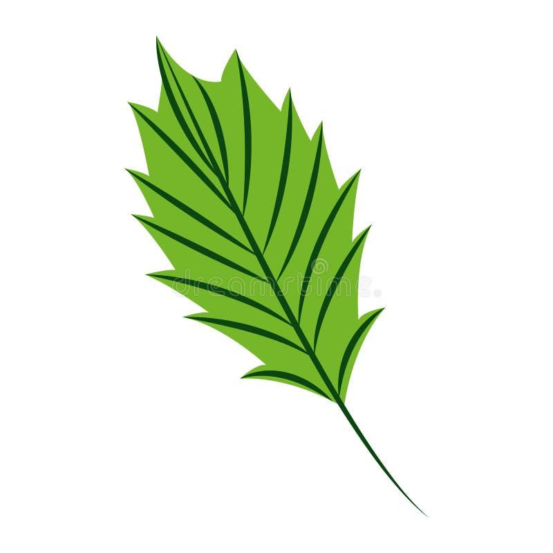 Зеленая природа лист на белой предпосылке иллюстрация штока