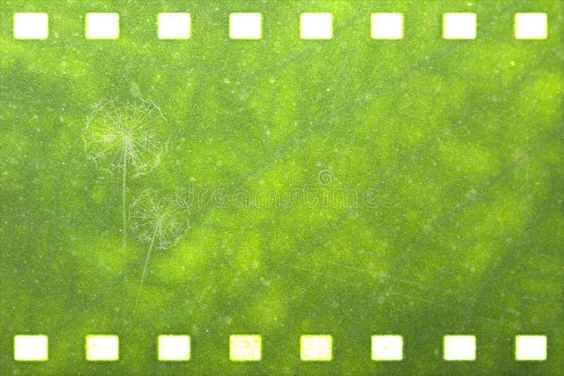 Зеленая прокладка пленки природы (одуванчик) иллюстрация вектора