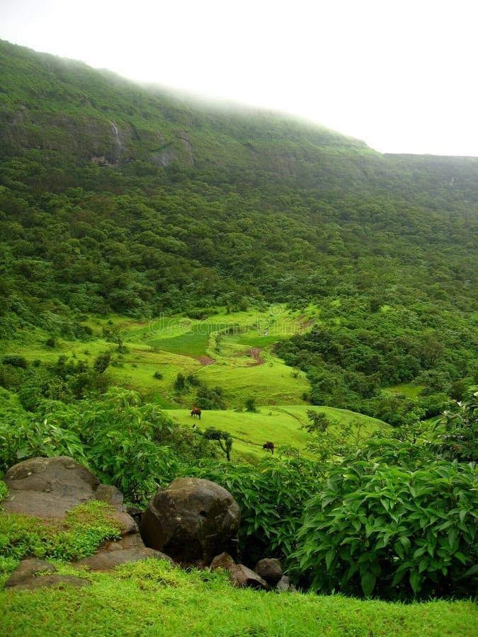 Зеленая пуща на горных склонах стоковая фотография