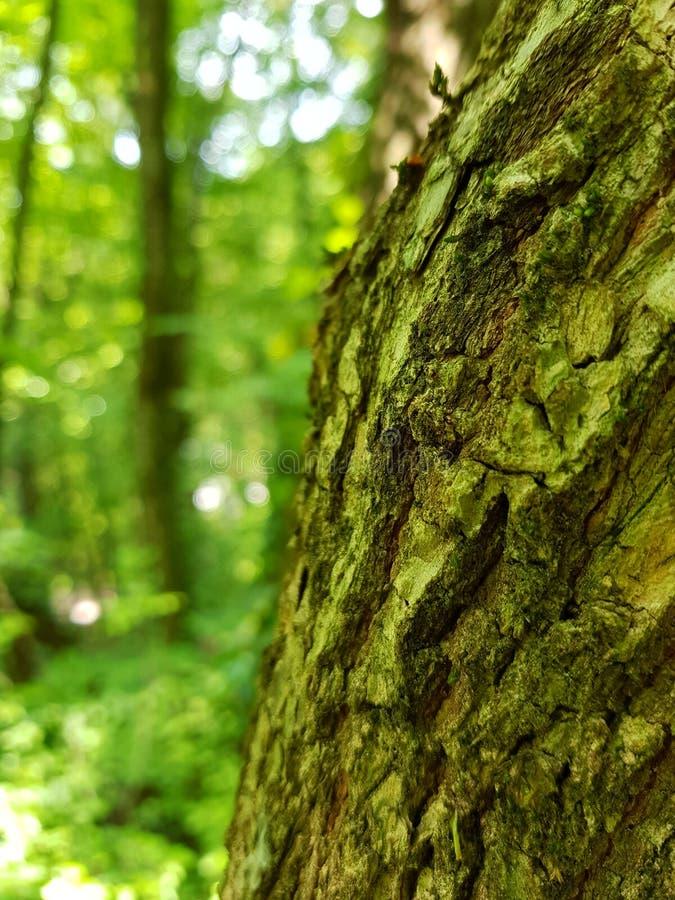 Зеленая пуща стоковые фотографии rf