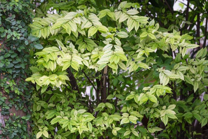 Зеленая свежая предпосылка лист стоковые изображения rf