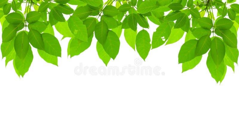 Зеленая свежая рамка листьев стоковые фото