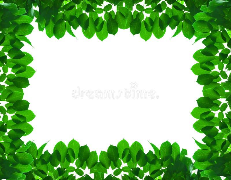Зеленая свежая рамка листьев стоковая фотография
