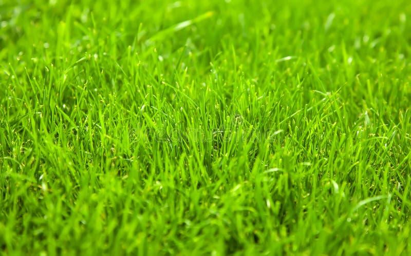 Зеленая свежая трава экологическая фон солнечный день стрельба стоковая фотография