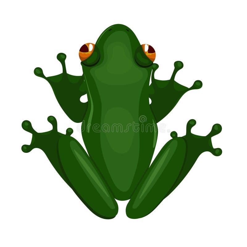 Зеленая сидя лягушка изолированная на белой предпосылке r иллюстрация штока