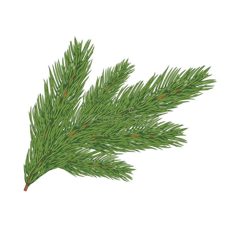 Зеленая сочная елевая ветвь иллюстрация вектора