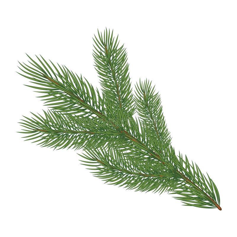 Зеленая сочная елевая ветвь бесплатная иллюстрация