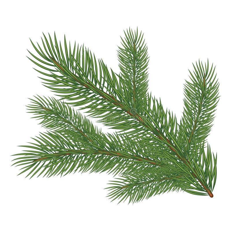 Зеленая сочная елевая ветвь иллюстрация штока