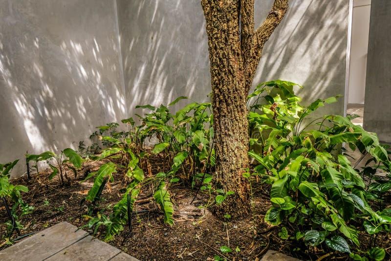 Зеленая стена сада и цемента стоковая фотография