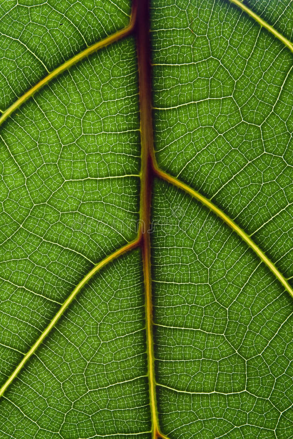 зеленая текстура листьев стоковое изображение