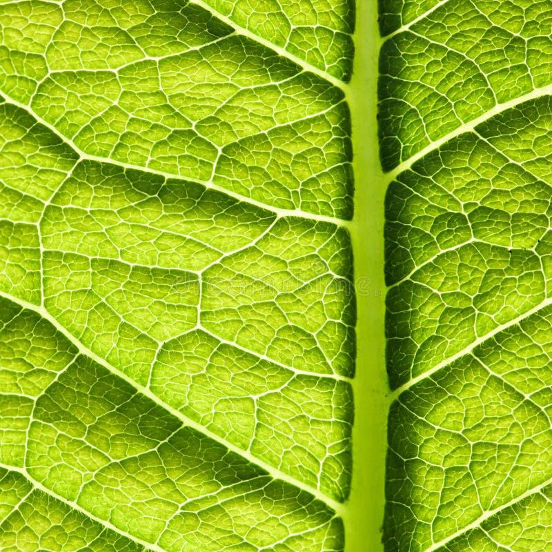 зеленая текстура листьев стоковое фото