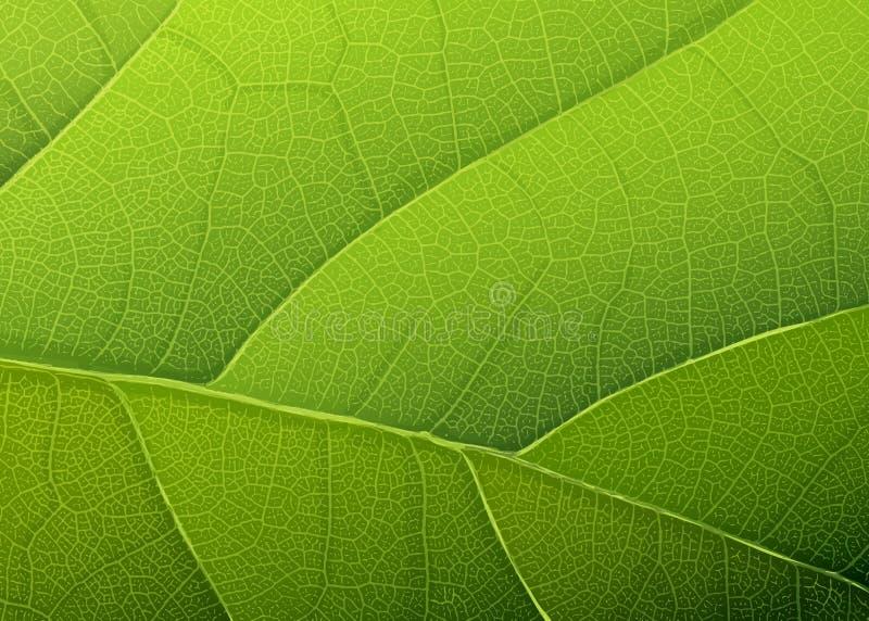 Зеленая текстура листьев. бесплатная иллюстрация