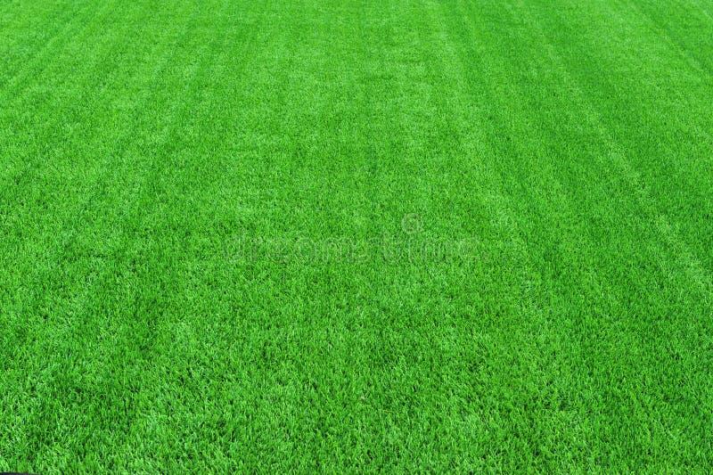 Зеленая трава арены футбола стоковое изображение rf