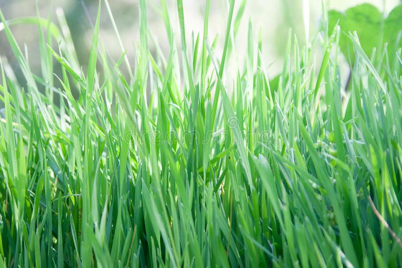 Зеленая трава естественная стоковое фото