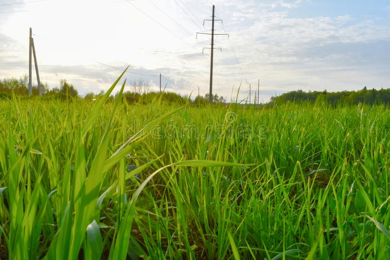 Зеленая трава на конце поля вверх стоковое фото rf