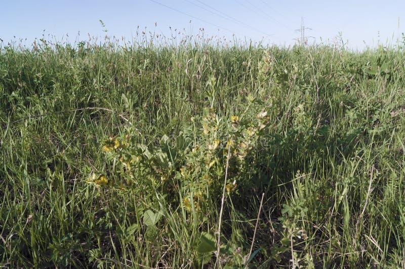 Зеленая трава на наклоне стоковые изображения