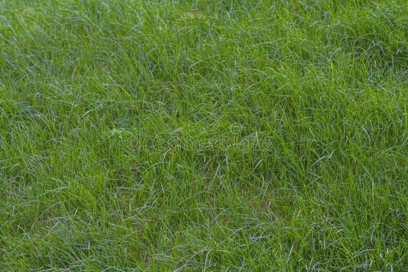 Зеленая трава на тенистой стороне холма стоковые фото
