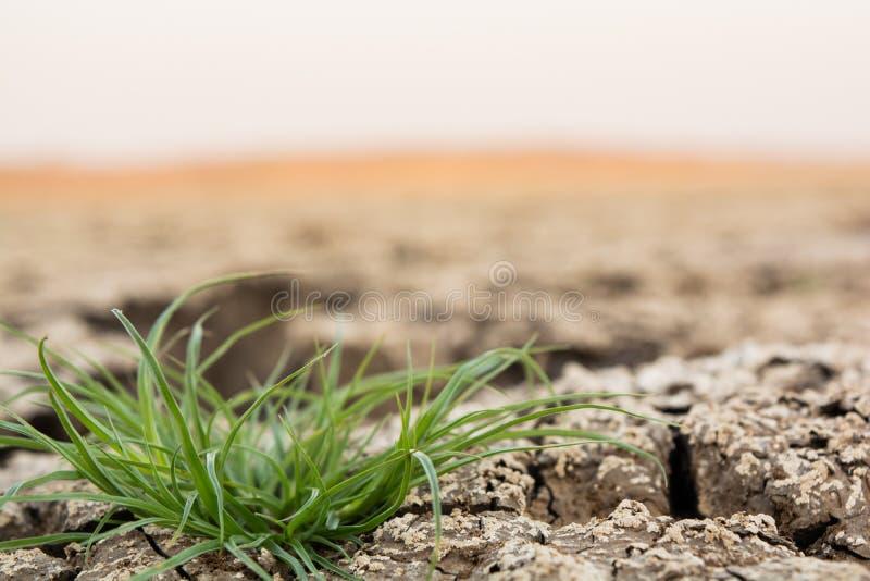 Зеленая трава растя через сухую треснутую черную землю почвы с космосом экземпляра стоковое изображение rf