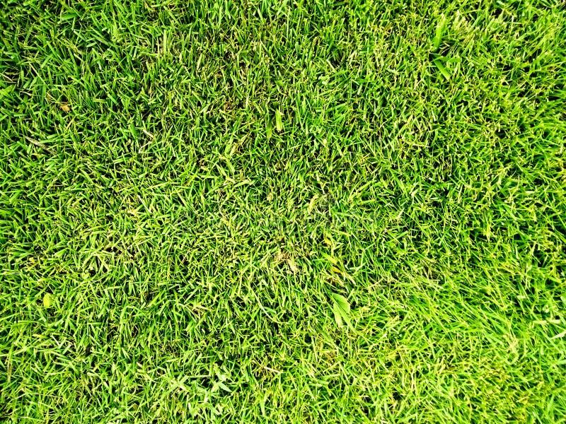 Зеленая трава текстурировала предпосылку поля, текстуру, картину Обои природы стоковая фотография