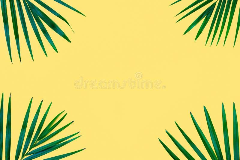 Зеленая тропическая ладонь выходит на желтую предпосылку Минимальная природа Введенное в моду лето Творческое плоское положенное  стоковое изображение