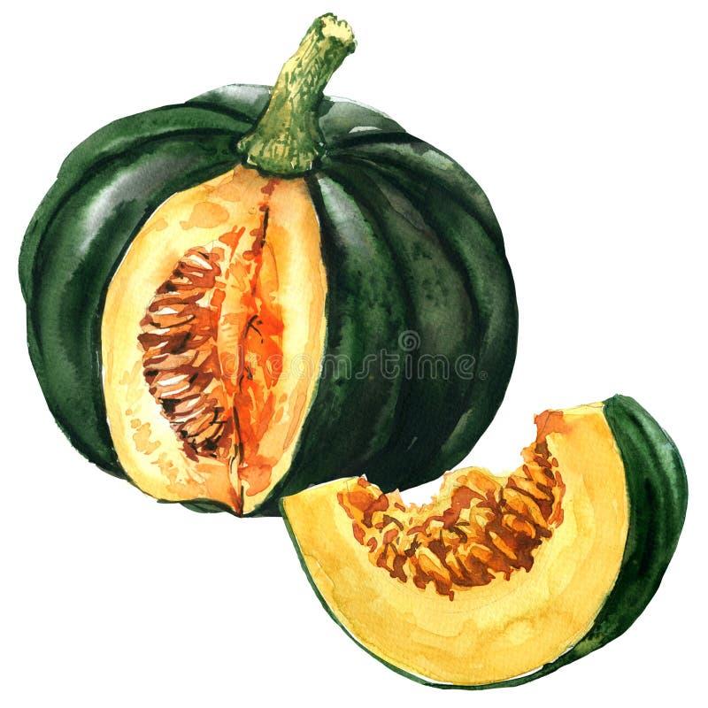 Зеленая тыква с куском, изолированным овощем, иллюстрацией осени акварели на белизне иллюстрация штока